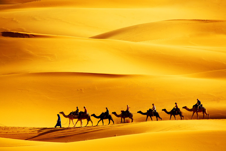 People are sitting on camels in the desert walking in one line
